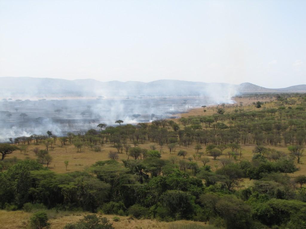 serengeti MT blog
